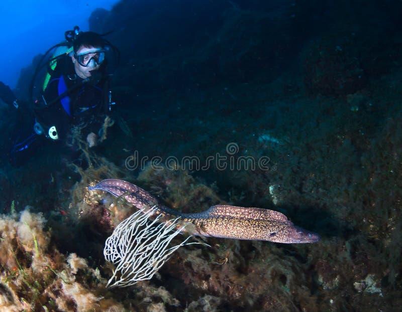 Enguia de Divrt e de Moray no recife fotografia de stock