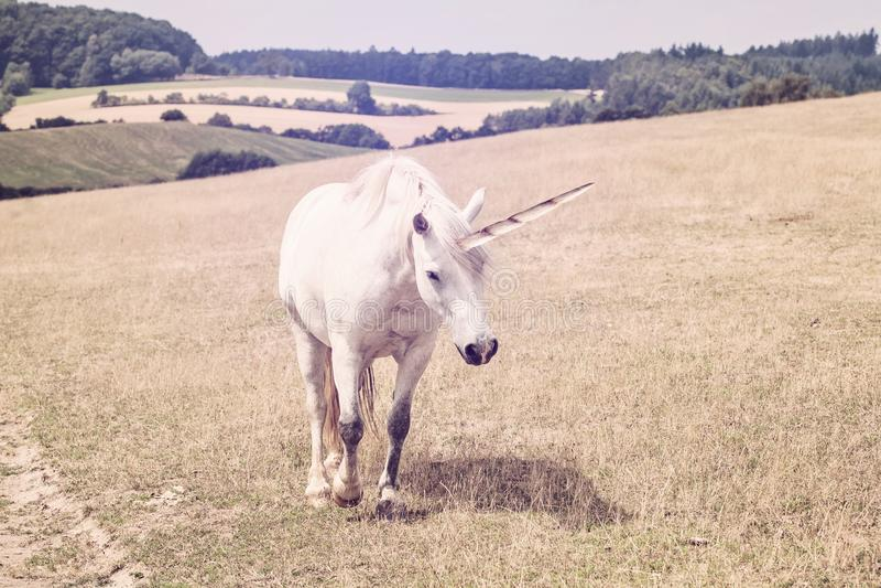 Enhörning som går i natur royaltyfria foton