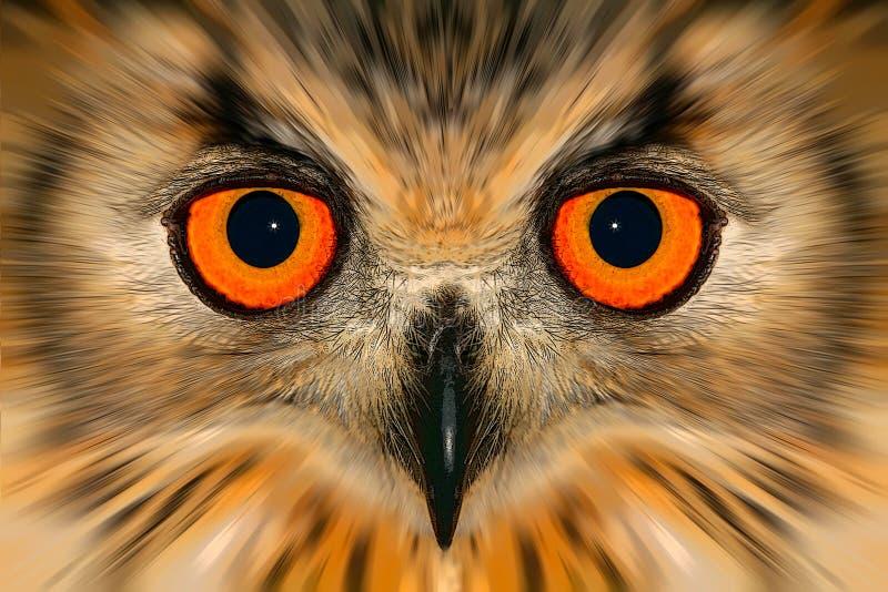 Enhanced owl portrait. Digitally enhanced portrait of an owl royalty free illustration