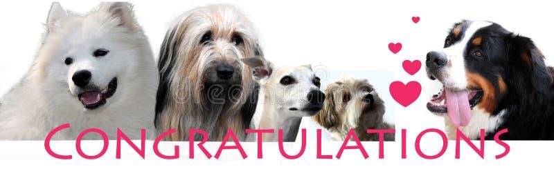 Enhorabuena que pone letras con diversos perros imagen de archivo