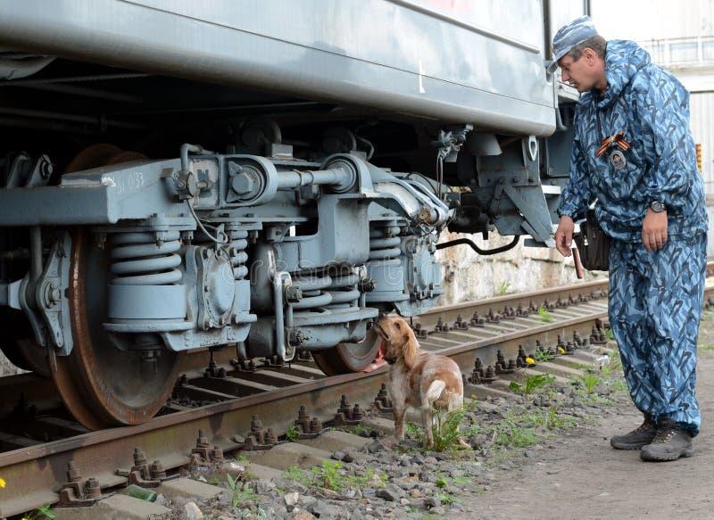 Enhund förlagehanterare med en hund undersöker en järnväg bil royaltyfri fotografi