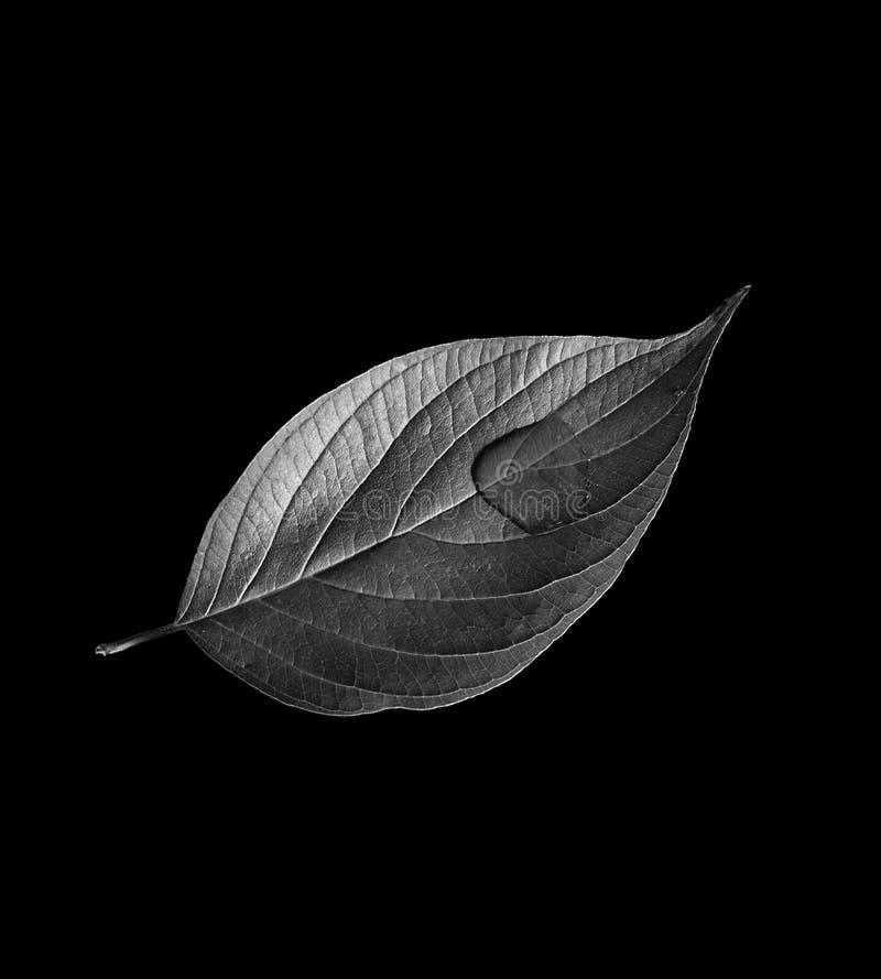 Enig blad op zwarte royalty-vrije stock afbeelding