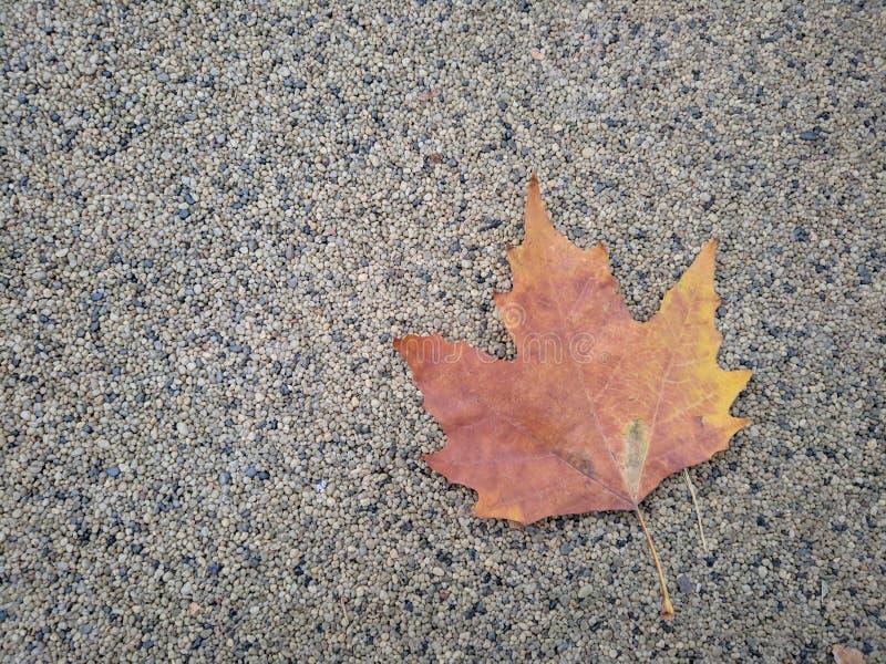 Enig de herfstblad op rotsachtige grond stock afbeeldingen