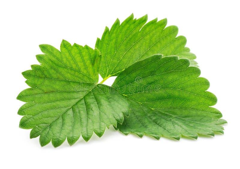 Enig groen aardbeiblad dat op wit wordt geïsoleerde stock foto's