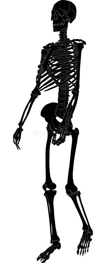 Enig menselijk skeletsilhouet vector illustratie