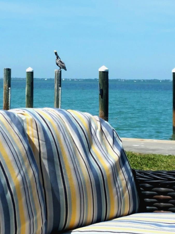 Enig neergestreken op een post door het water naast een dok met een laag door de oceaan met blauwe hemel en blauw water stock afbeelding