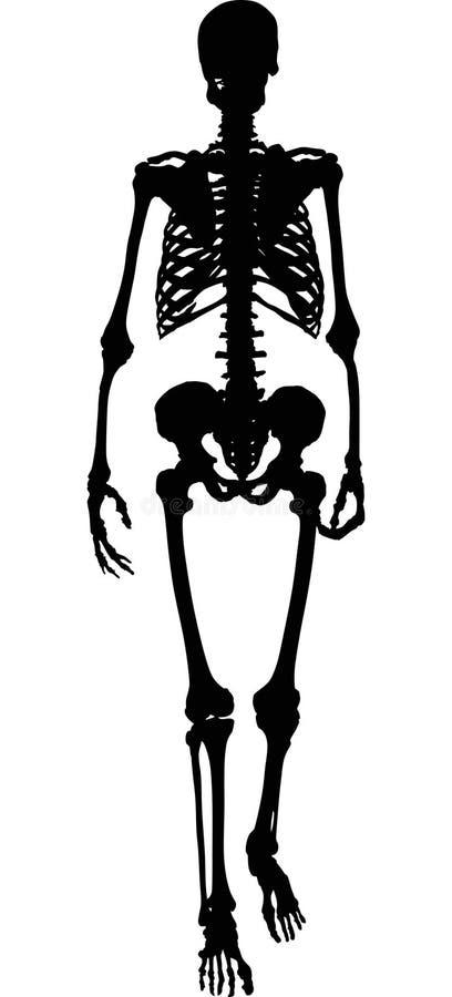 Enig zwart silhouet van menselijk skelet royalty-vrije illustratie