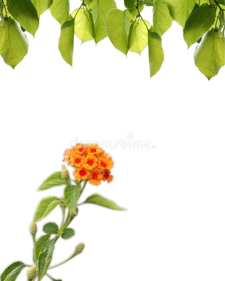 Enige bloem stock fotografie