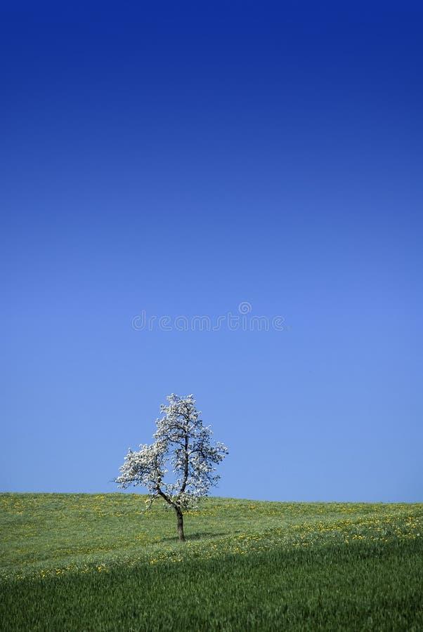 Enige boom stock afbeeldingen