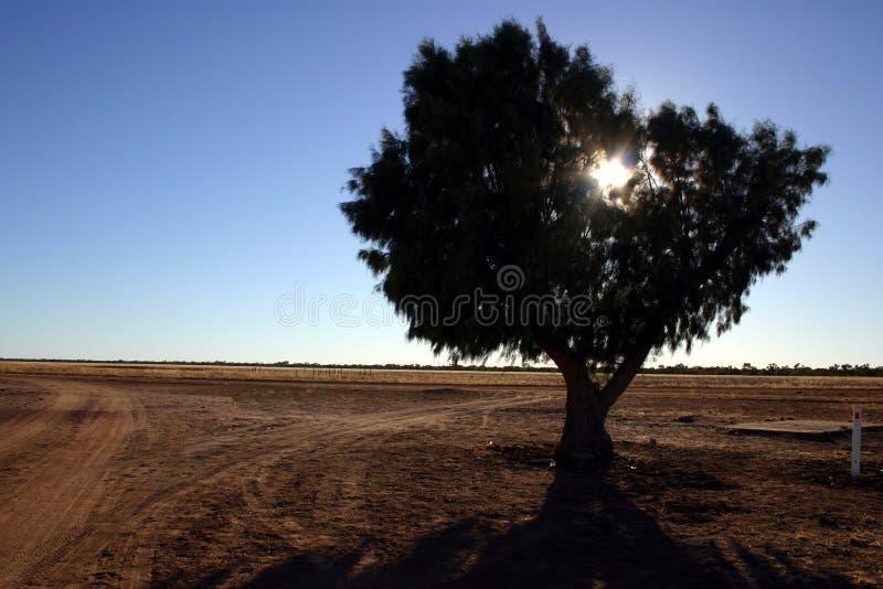 Enige boom in binnenland Australië royalty-vrije stock afbeeldingen