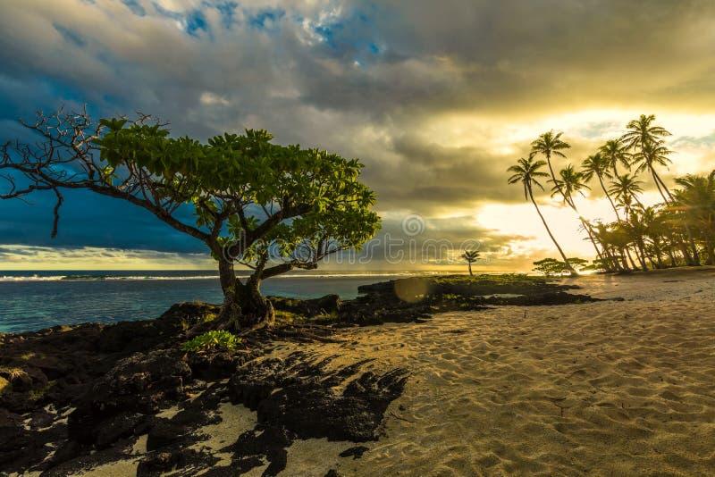 Enige boom en kokosnotenpalmen in de zonsondergang op het Eiland van Samoa stock afbeelding