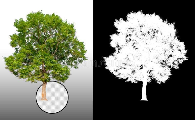 Enige boom met het knippen van weg vector illustratie