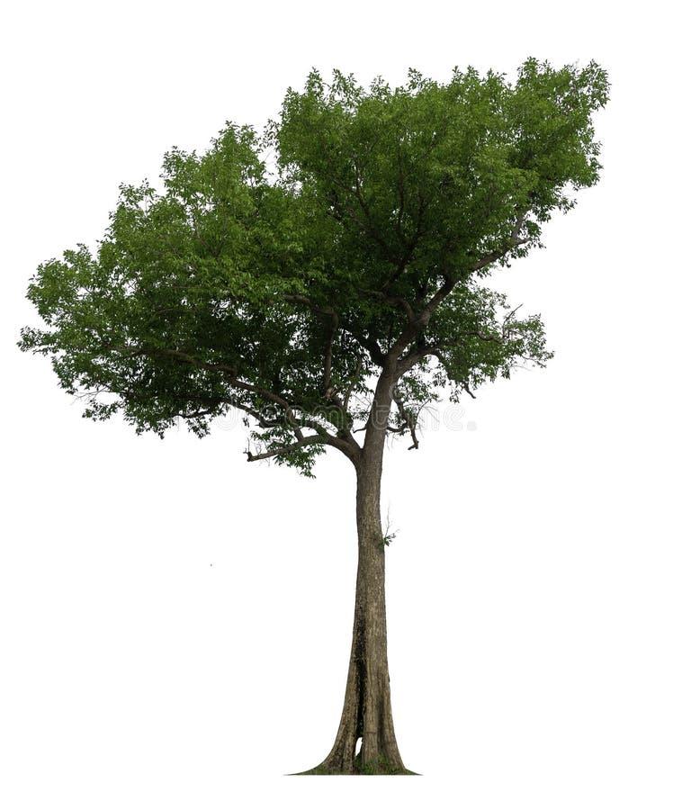 Enige boom met het knippen van weg royalty-vrije illustratie
