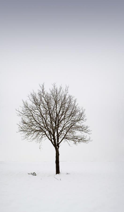 Enige boom op gebied tijdens de winter 1 stock afbeelding