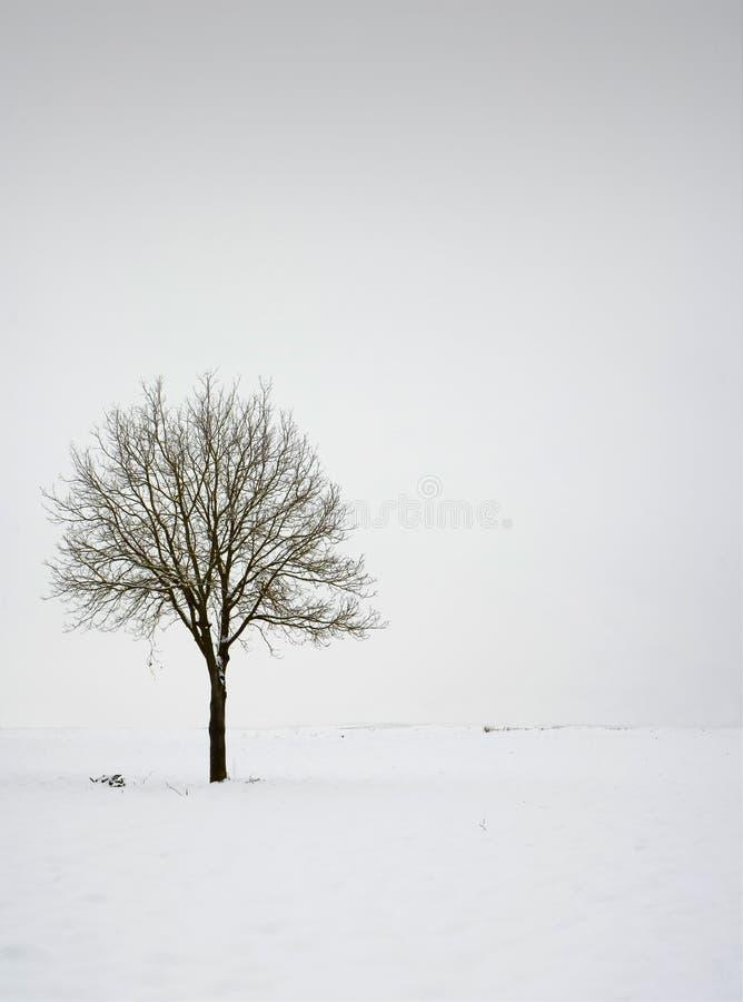 Enige boom op gebied tijdens de winter royalty-vrije stock fotografie