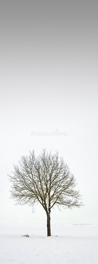 Enige boom op gebied tijdens de winter stock foto