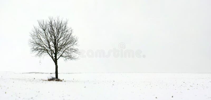 Enige boom op gebied tijdens eerste sneeuw stock foto's