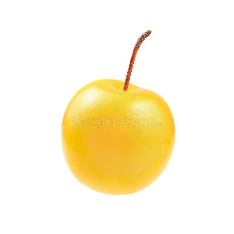 Enige die domestica van Prunus van de mirabelepruim op witte backgr wordt geïsoleerd stock afbeelding