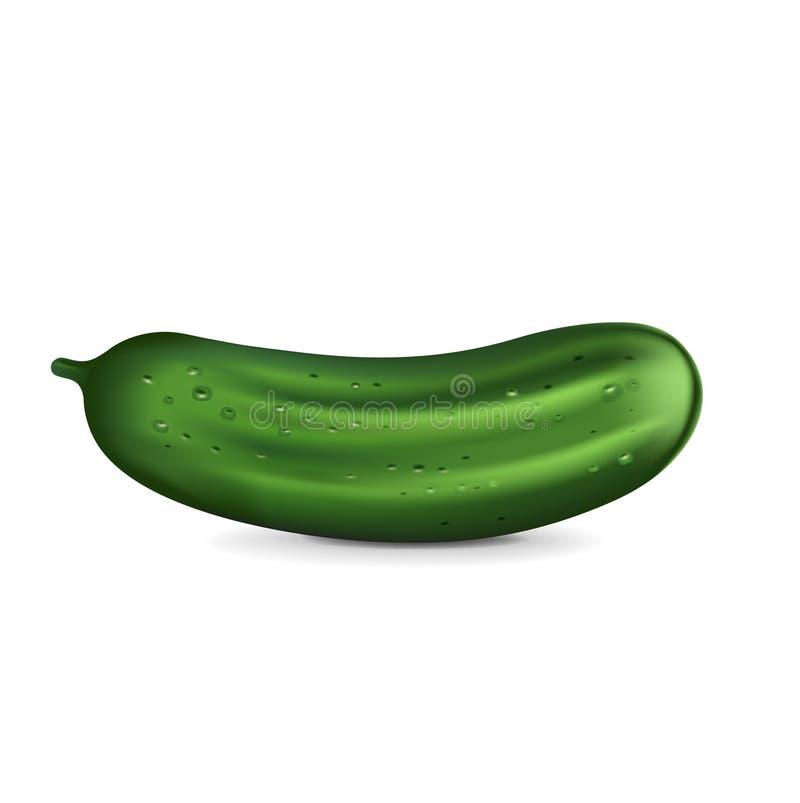 Enige die komkommer op wit wordt geïsoleerd vector illustratie