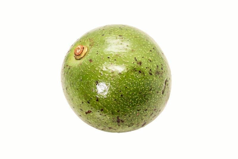 Enige groene Thaise avocado op witte achtergrond stock afbeelding