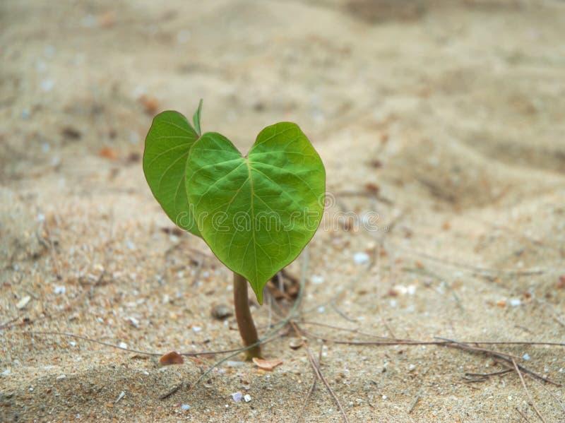 Enige jonge plant royalty-vrije stock afbeeldingen