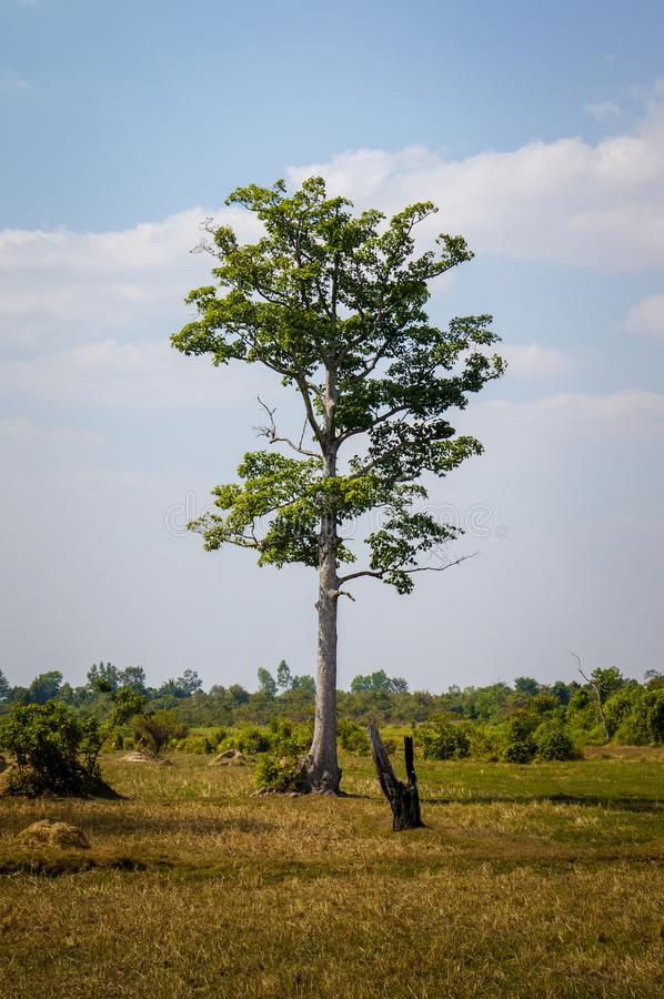 Enige, lange boom met groene en bruine weide in de voorgrond royalty-vrije stock afbeelding
