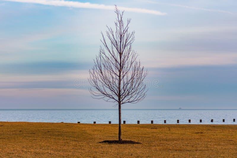 Enige Leafless Boom langs de Kust van Meer Michigan in Chicago tijdens de Winter royalty-vrije stock foto's