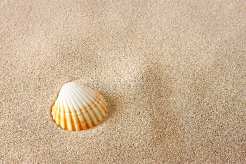 Enige overzeese shell op zand bij het strand royalty-vrije stock foto's