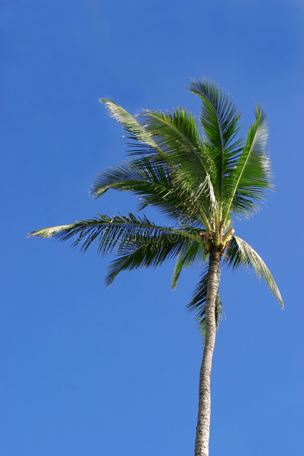 Enige Palm royalty-vrije stock fotografie