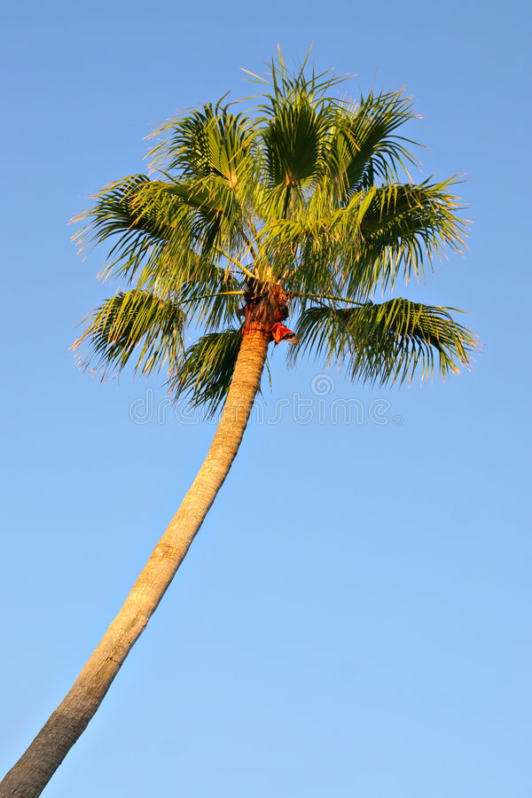 Enige palm stock foto's