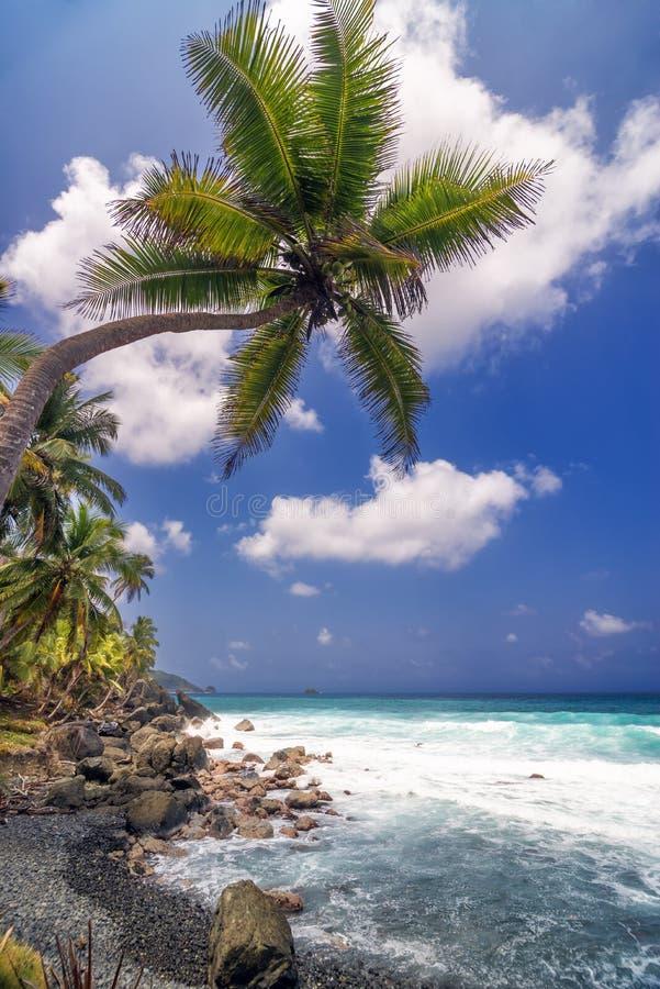 Enige Palm en Overzees royalty-vrije stock afbeeldingen