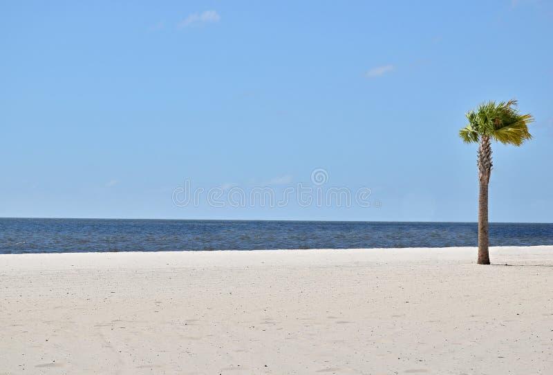 Enige palm op het strand stock fotografie