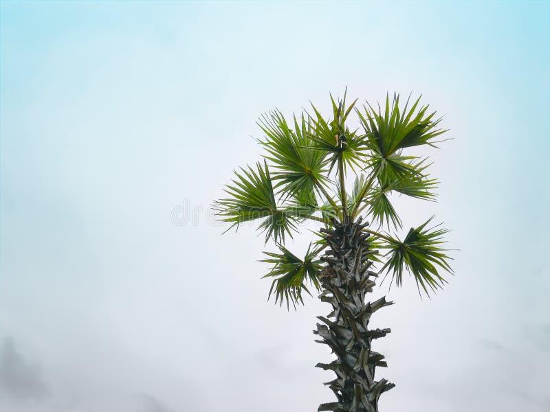 Enige Palmboomstam en Bladeren tegen Blauwe Hemel stock fotografie