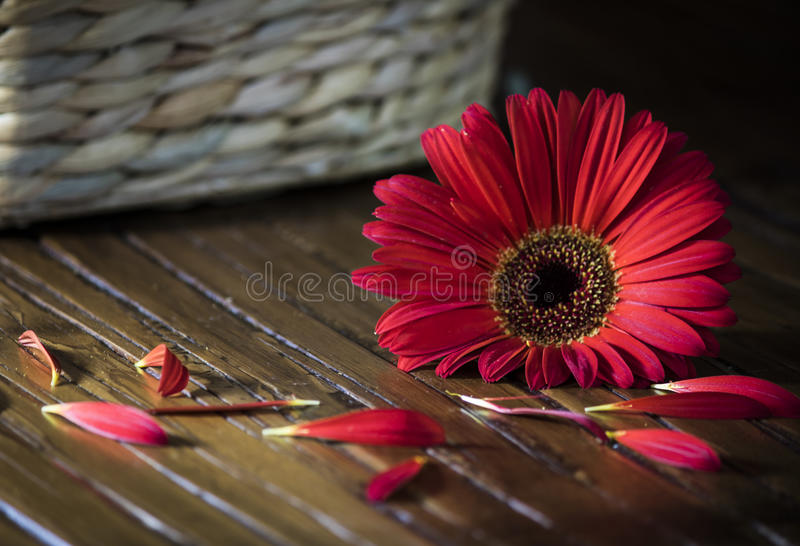 Enige rode bloem royalty-vrije stock foto's