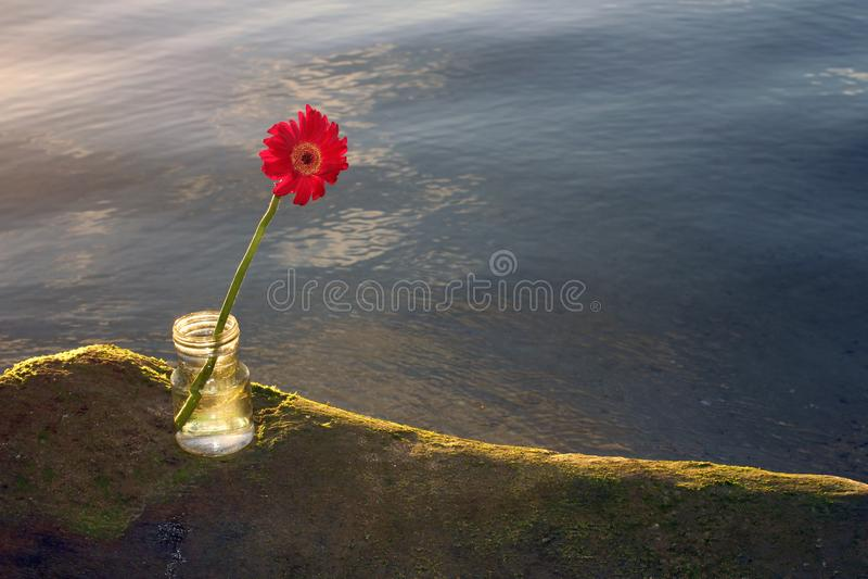 Enige rode gerberabloem op overzeese roc in transparante vaas royalty-vrije stock foto