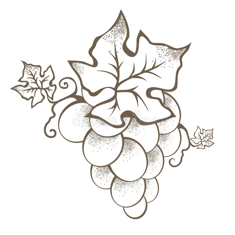 Enige Uitstekende Druiventak royalty-vrije illustratie