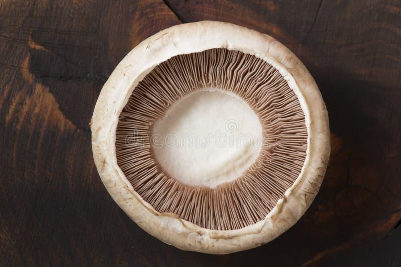 Enige verse champignon stock fotografie