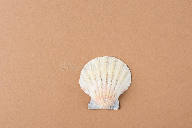 Enige Vlakke Semi Cirkeloverzees Shell op de Bruine Achtergrond van de Koffiekleur Minimalistische moderne stijl Funky In Kleuren stock afbeelding