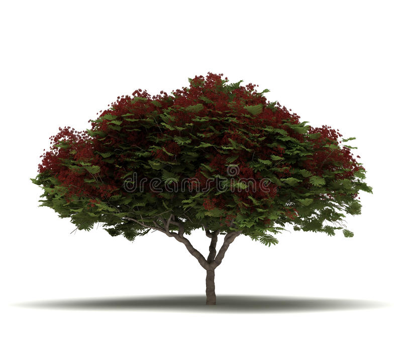 Enige Vlamboom royalty-vrije illustratie