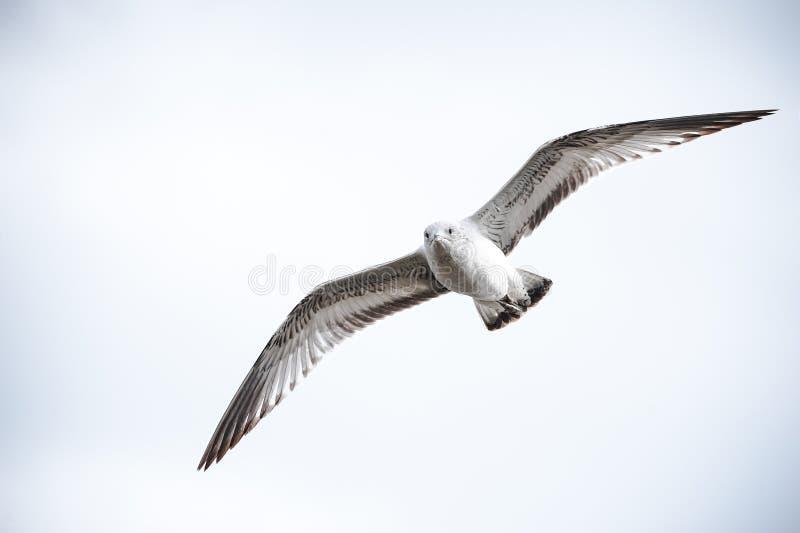 Enige vogel royalty-vrije stock foto's
