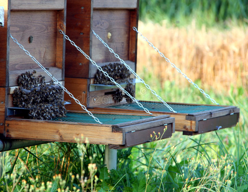 Enjambre de las abejas imagen de archivo