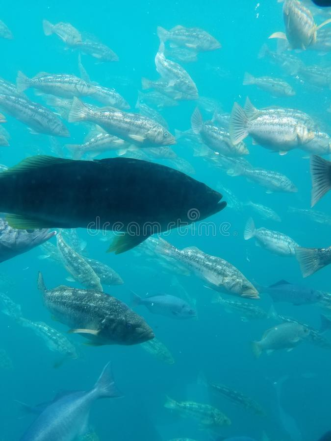 Enjambre de los pescados fotos de archivo