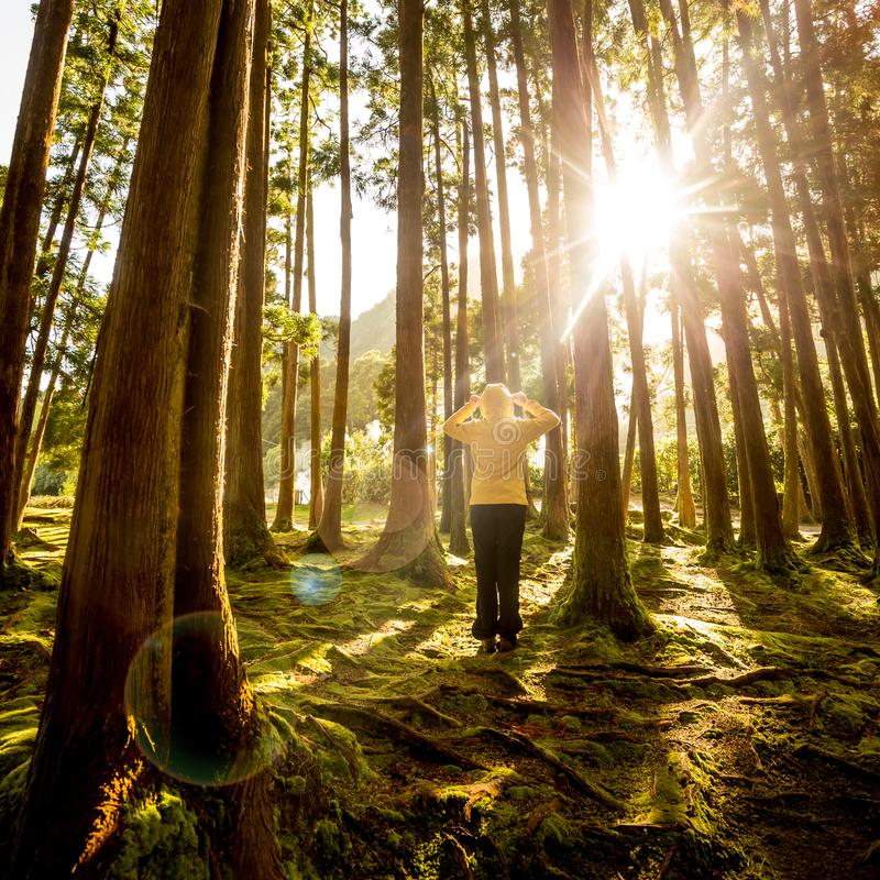 Enjoy the nature. Back view of a woman in a beautiful forest royalty free stock image