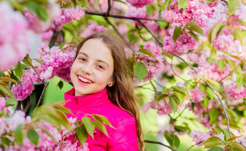 Enjoy smell of tender bloom. Sakura flower concept. Gorgeous flower and female beauty. Natural cosmetics for skin. Girl. In cherry flower. Sakura tree blooming stock photography