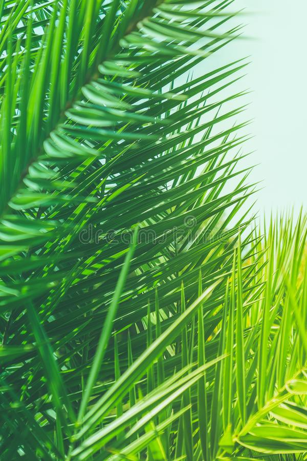 Enjoy a tropical dream royalty free stock photography