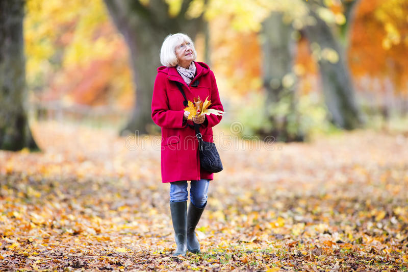 Enjoying An Autumn Walk. Senior woman is enjoying an independent walk through the autumn woods. She is collecting leaves and enjoying the views stock photography
