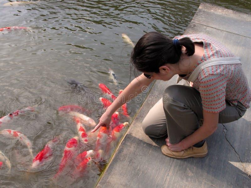 Enjoying the carps. Girl enjoying the colorful carps in a Japanese garden pond royalty free stock photography