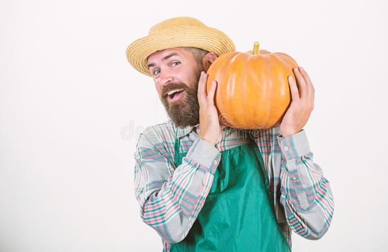 Enjoying new great day. seasonal vitamin. organic food. happy halloween. healthy product. man with pumpkin. bearded man. Farmer hold big squash. harvest stock photos