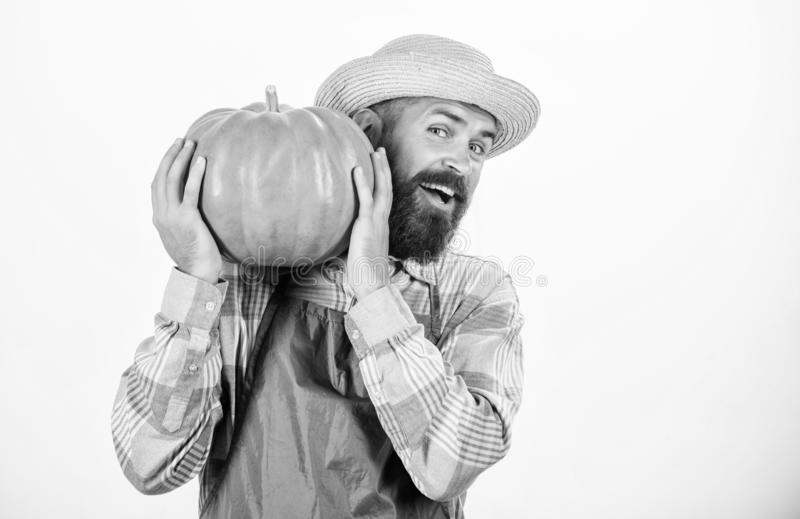 Enjoying new great day. seasonal vitamin. organic food. happy halloween. healthy product. man with pumpkin. bearded man. Farmer hold big squash. harvest royalty free stock image