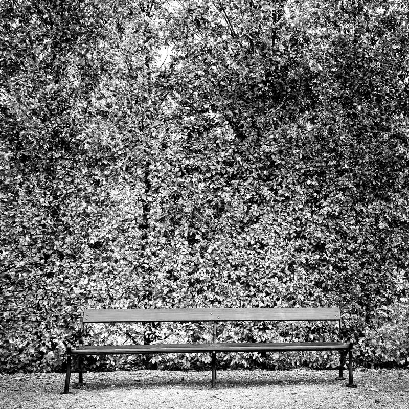 Enkel bänk i parkera arkivfoton